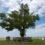 Голосуем за представителя России на международном конкурсе «Европейское дерево года 2020» – «Одинокий тополь» из Республики Калмыкия!