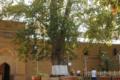 Жители области могут поддержать российское «дерево Европы»