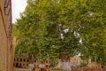 Платан из Дербента с вашей помощью может стать «Дeревом года»